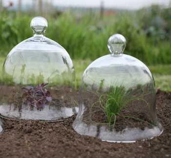 Les cloches en verre génèrent un effet de serre